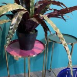 Foto plantentafeltjes